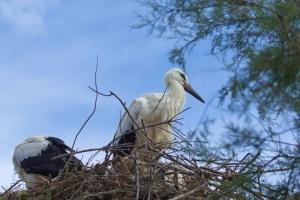 Artenschutz durch das Landesnaturschutzgesetz