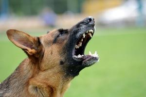 Eine fahrlässige Körperverletzung durch einen Hundebiss wird strafrechtlich verfolgt.