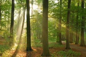 Informationen zum Forstgesetz und Waldgesetz