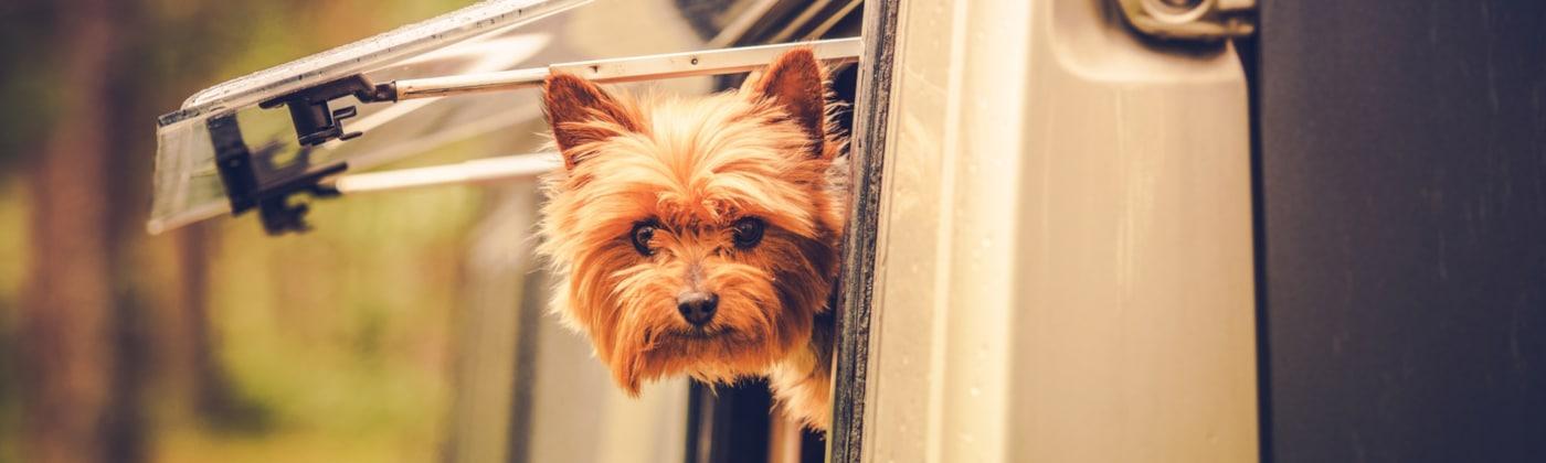 Headerbild Lärmbelästigung durch Hundegebell