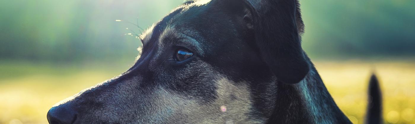 Oft ist Schmerzensgeld nach einem Hundebiss eine Option.