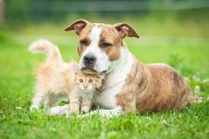 Katze oder Hund angefahren? Fahrerflucht kann beim Weiterfahren nicht vorliegen, jedoch ein Verstoß gegen das Tierschutzgesetz.