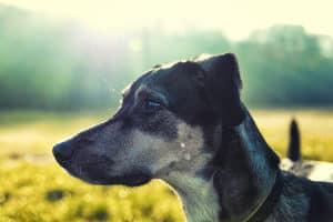 Auch Hundebellen kann eine Lärmbelästigung darstellen.