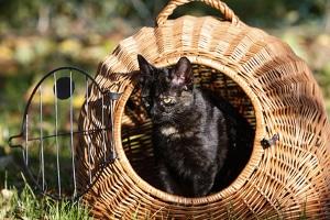 Wurde eine Katze überfahren, kann keine Fahrerflucht nach StGB vorliegen, wenn der Fahrer weiterfährt.