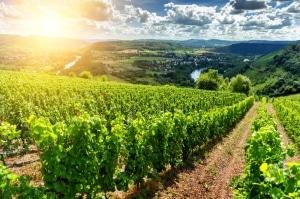 Das Landschaftsgesetz wurde zum Umweltschutz eingeführt