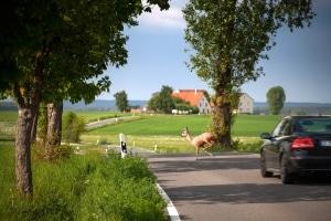 Auf der Landstraße hilft die Höchstgeschwindigkeit das Unfallrisiko zu mindern.