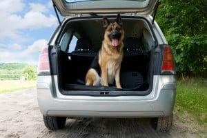 Paragraph 38 StVO enthält Bestimmungen für Tiere im Straßenverkehr.