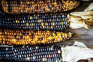 Vorteile der Gentechnik: Lebensmittel können schneller und sicherer angebaut werden.